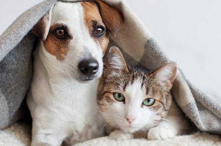 Find a Pet-friendly Community