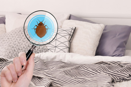 Bed Bugs: Surprising Hiding Spots